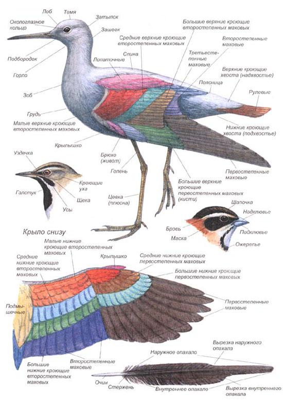Птицы урала фото и название